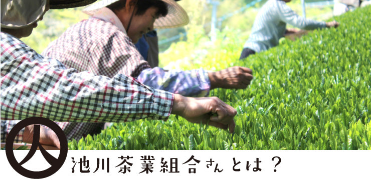 Ikegawa Tea Farm Coop