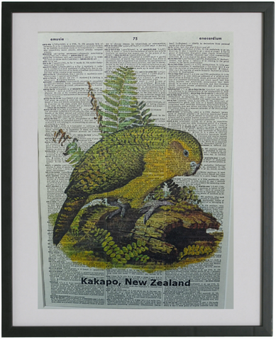 Kakapo Bird Print No.245, bird prints