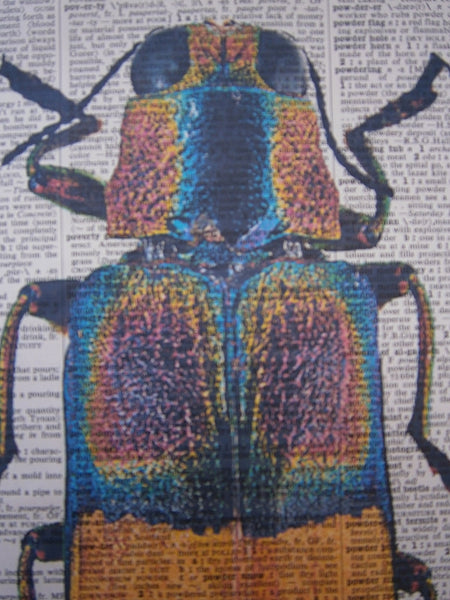 Jewel Beetle Print No.167, botanical