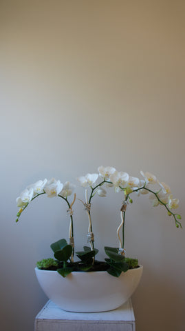 Deluxe Orchids Arrangement