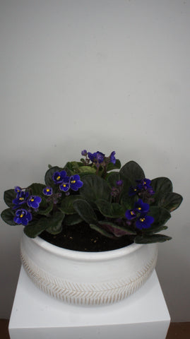 Mom's favorite African violets bowl