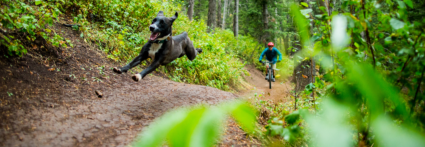 Healthy Path For Your Dog - Raw Wild