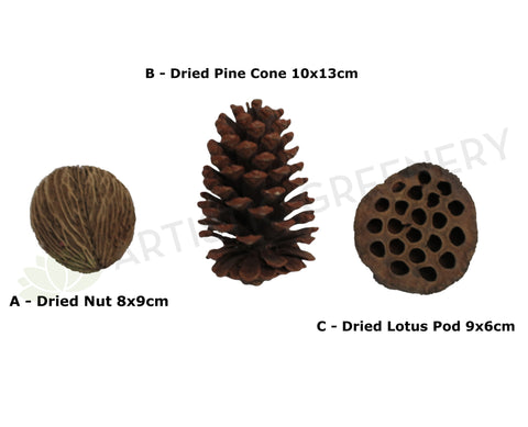 ACC0057 Dried Nut, Pine Cone, Lotus Pod