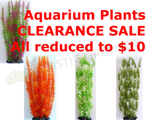 Aquarium Plants - CLEARANCE SALE