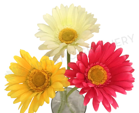 Clearance Stock - Gerbera Single Stem 65cm 3 colours