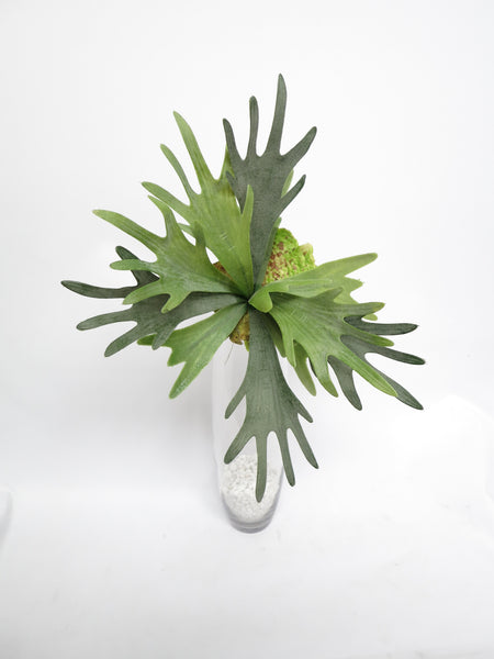 Sp0148 Artificial Staghorn Fern Stag Horn Large Real