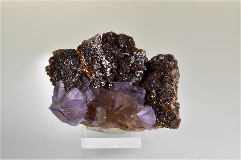 Fluorite and Sphalerite, Rosiclare Level Minerva #1 Mine, Ozark-Mahoning Company, Cave-in-Rock District, Southern Illinois, Mined Nov. 1993, Kalaskie Collection #42-236, Medium Cabinet 6.0 x 8.0 x 12.0 cm, $300.  Online 8/23.