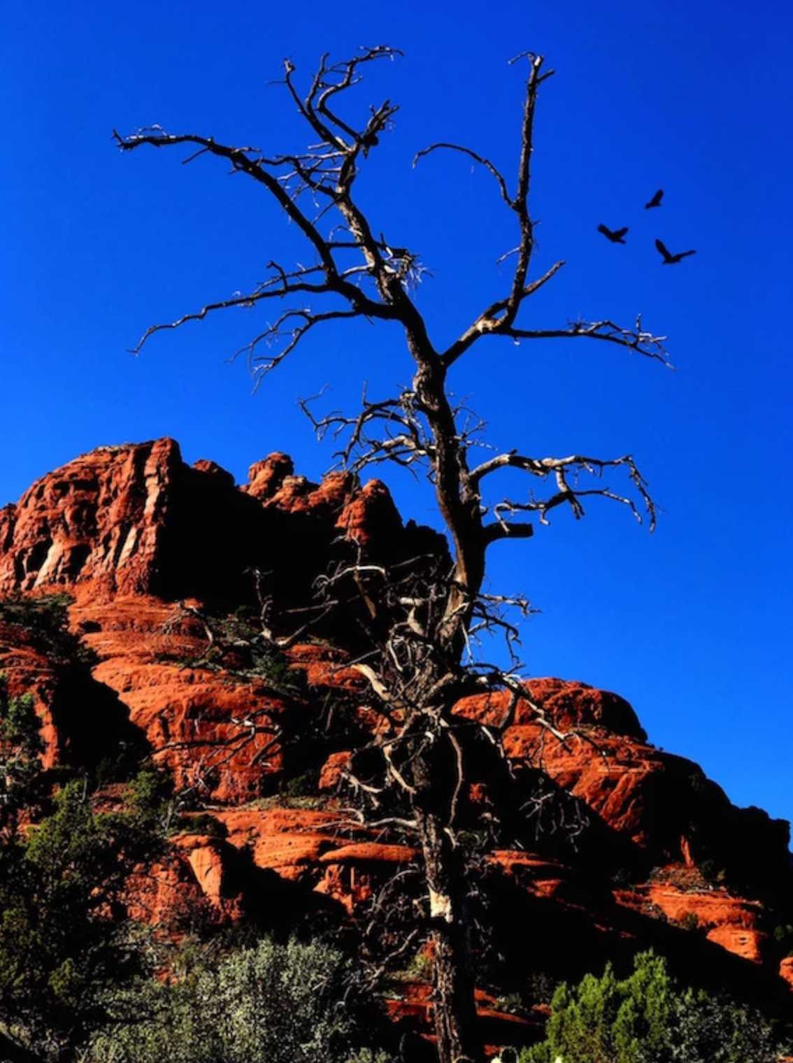 Bell Rock, Sedona by Mary Clare O'Neal