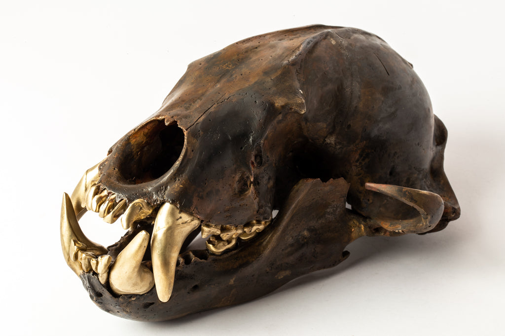 Bear Skull (DR+MR)