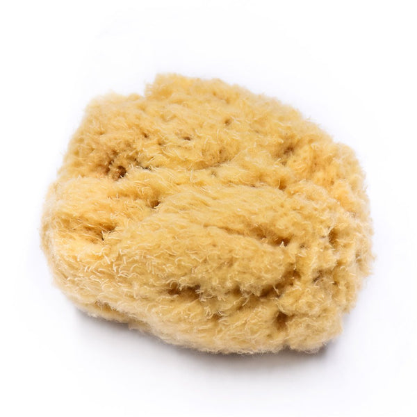 natural sea sponge triclosan free