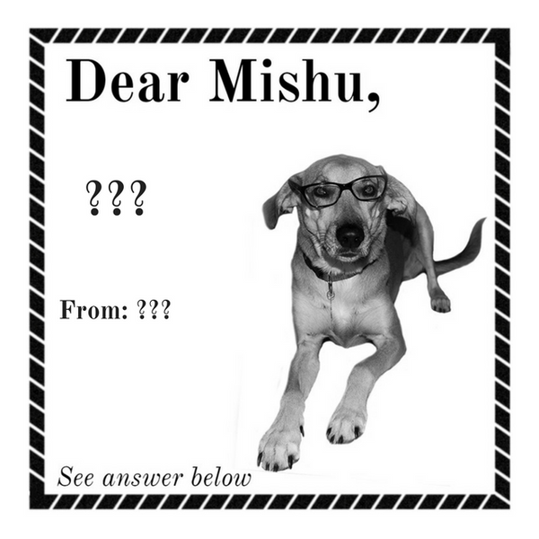 DearMishu Best Posts 2016 - A Totally Zen Advice Column Written by a Dog, Really.