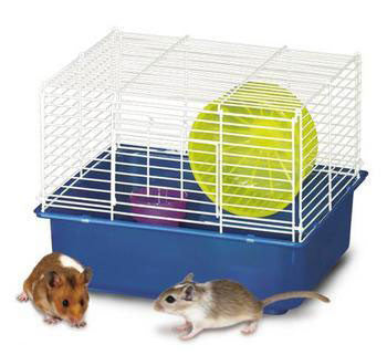 My First Home Hamster 1story 6pk (100079043) - Peazz.com