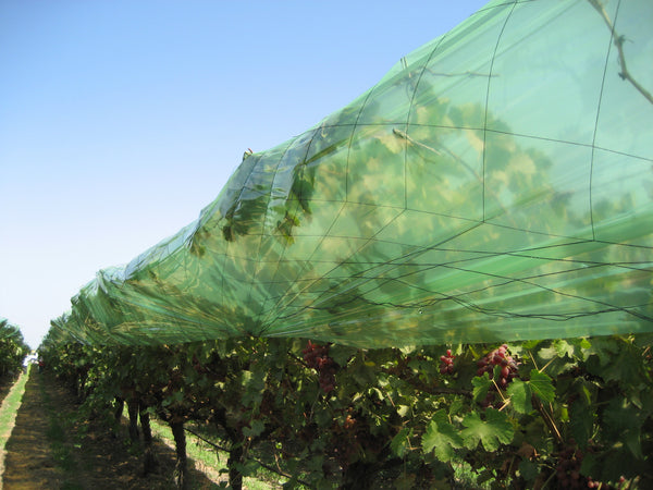 Rain Film paired with bird netting to maximize security