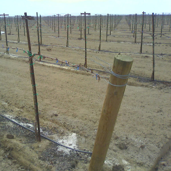 Rows of wood posts in field.