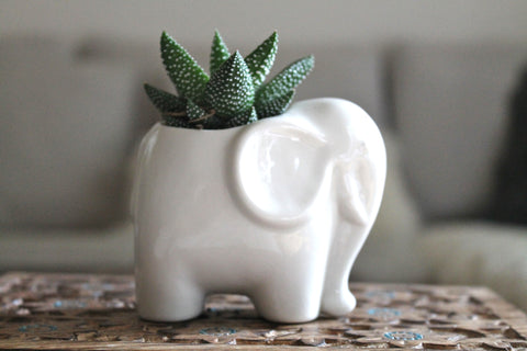 Porcelain Mini Elephant succulent planter