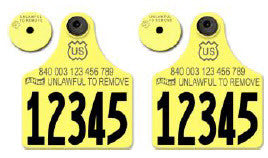 Allflex USDA 840 Visual Tamperproof set of 2 Maxi Numbered 1 Side Ear Tags