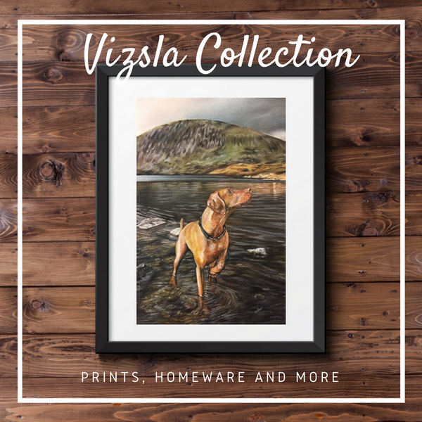 Hungarian Vizsla Collection