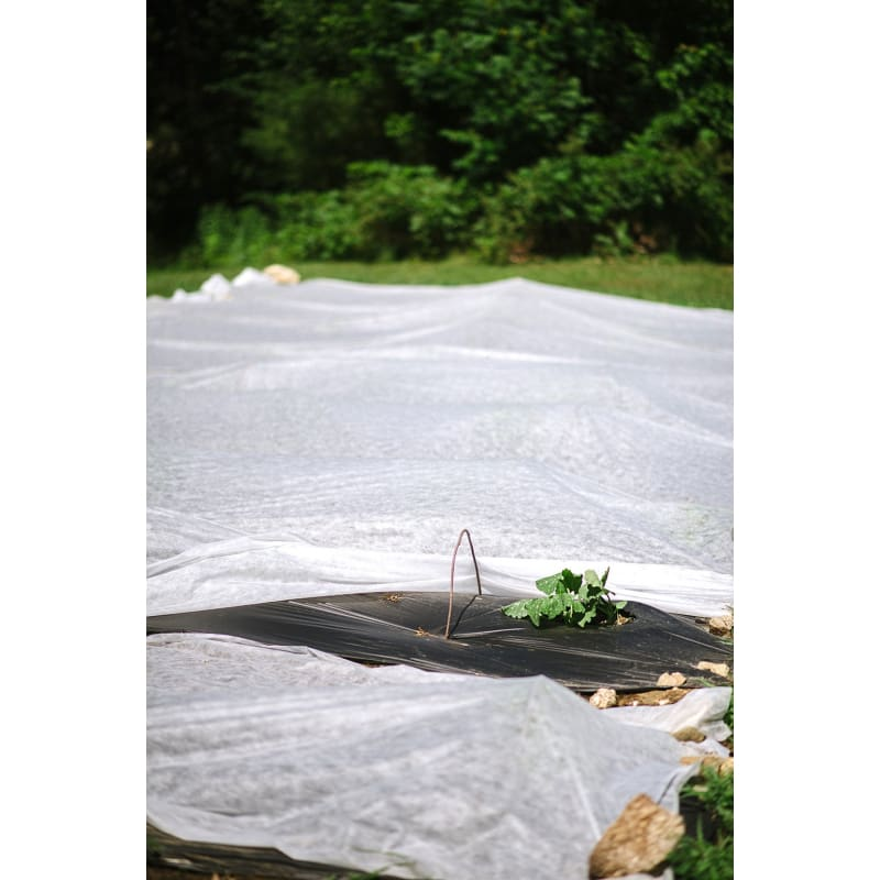 AgroFabric Pro 34 Row Cover 6' x 25' blanket