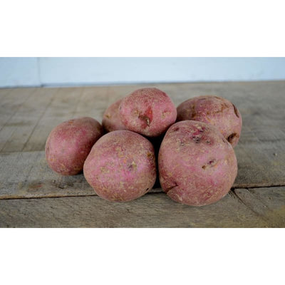 POTATO DARK RED NORLAND (SOLD OUT) - Spring
