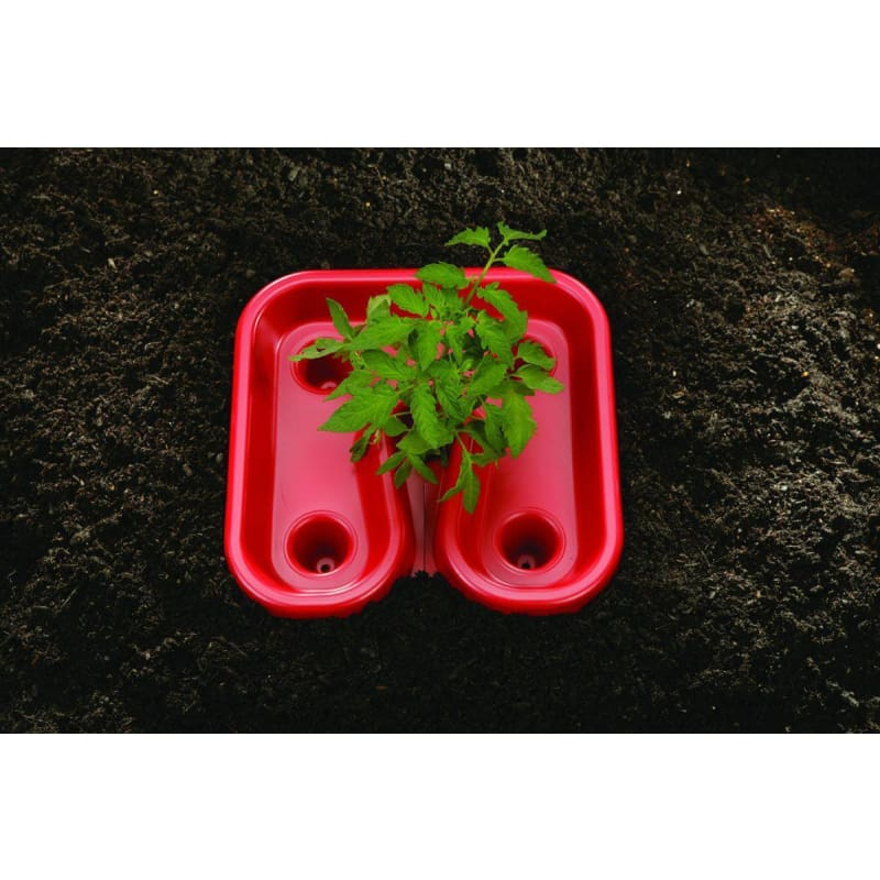 Red Tomato Trays (3)