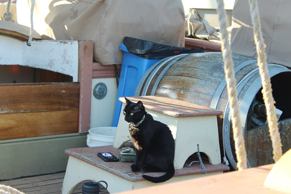 Ship's cat Schooner Lynx Mystic Connecticut