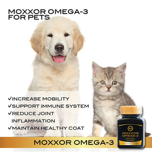 Easy, Safe and Effective Omega-3 Supplements for Cats and Dogs