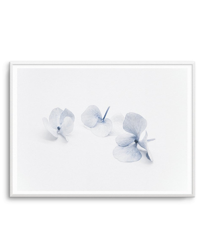 Three in Blue | Hydrangea III - Olive et Oriel