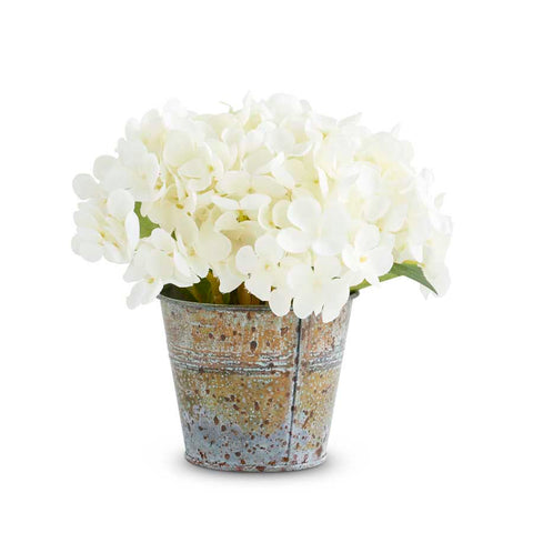 Hydrangea in Tin Pot