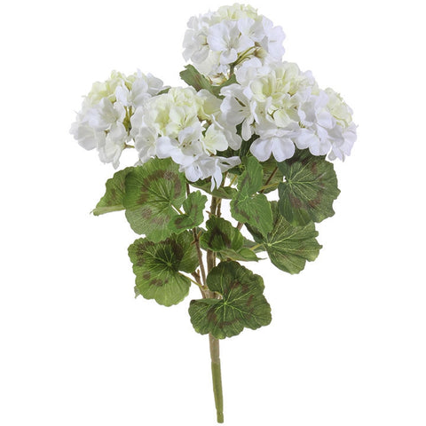 White Geranium Bush