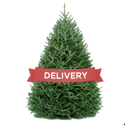 DC Christmas Tree Delivery- Christmas Tree Delivery