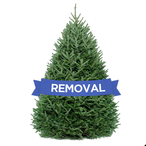 DC Christmas Tree Delivery- Christmas Tree Removal
