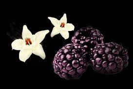 Black Raspberry & Vanilla Fragrance