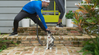 Realistic Ways to Exercise Your Cat
