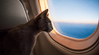 Top 3 Tips for Traveling with Your Cat