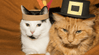 3 Thanksgiving Tips for Cat Lovers: Food, Flowers and Fun