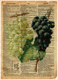 Grape art, red and white grapes, old botanical illustration, nature artwork print on dictionary page