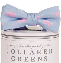 Boys Pigs Bow Tie Carolina Boys Bow Ties - Collared Greens American Made