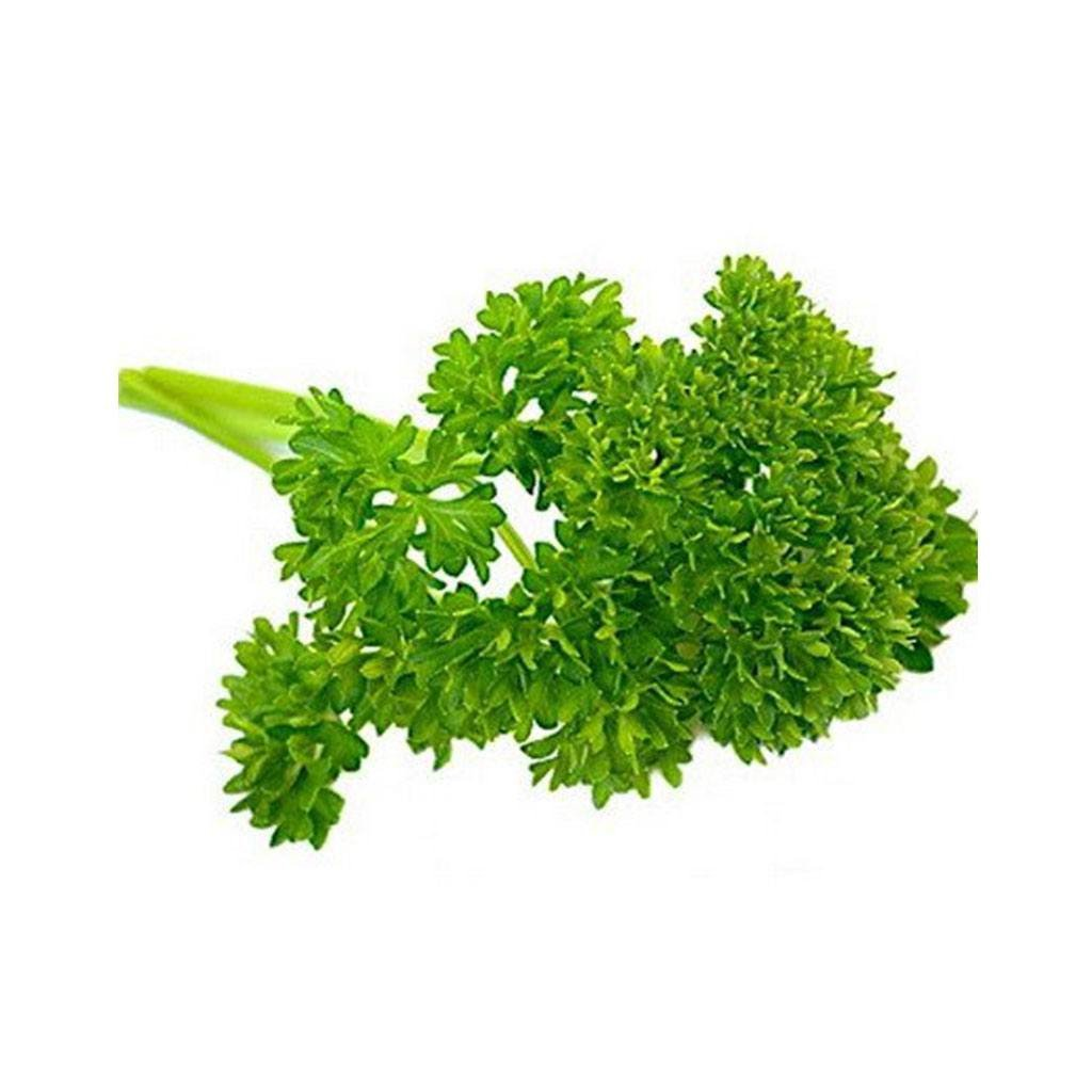 Daun Pasli / Parsley Leaves