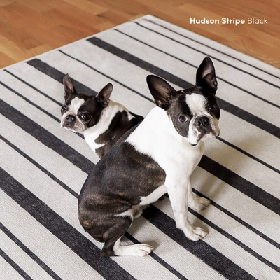 4 Things to Consider When Shopping for a Pet-Friendly Rug Image