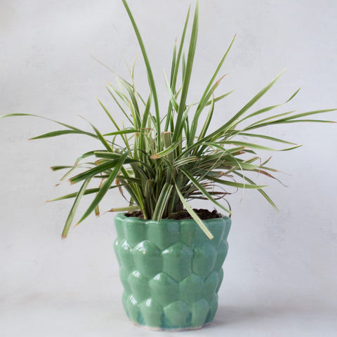 Aged Green Bubble Planter