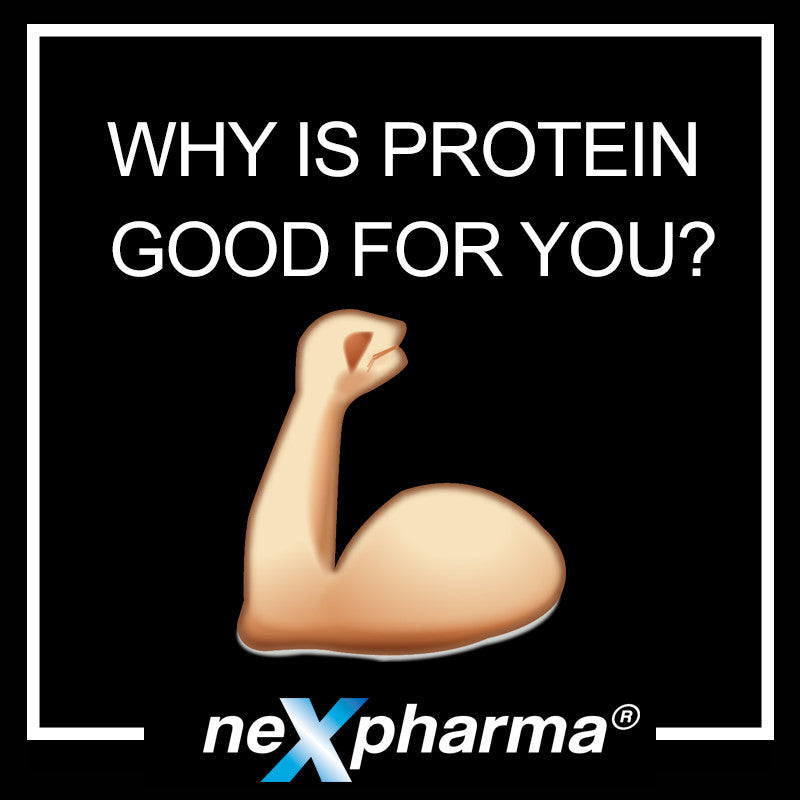 Why Is Protein Good For You?