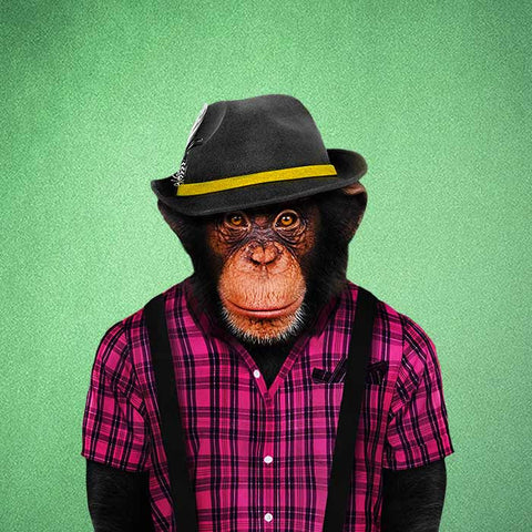 Monkey Male Collection