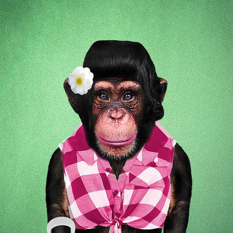 Monkey Female Collection