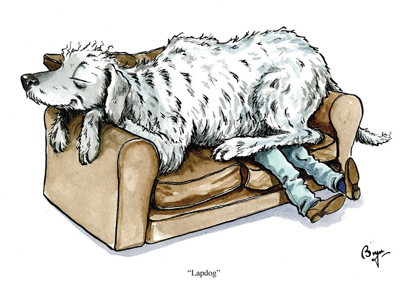 Lapdog dog greeting card by Bryn Parry
