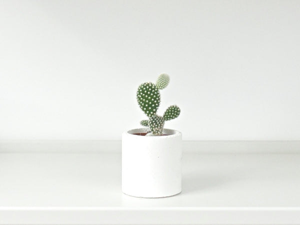Concrete Planter - Small