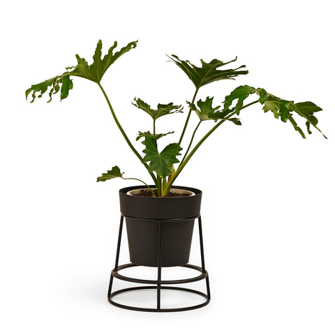 POTPLANT Double Sided Plant Stand