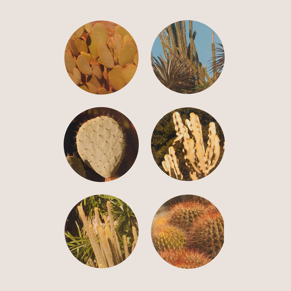 Cactus coasters set of 6