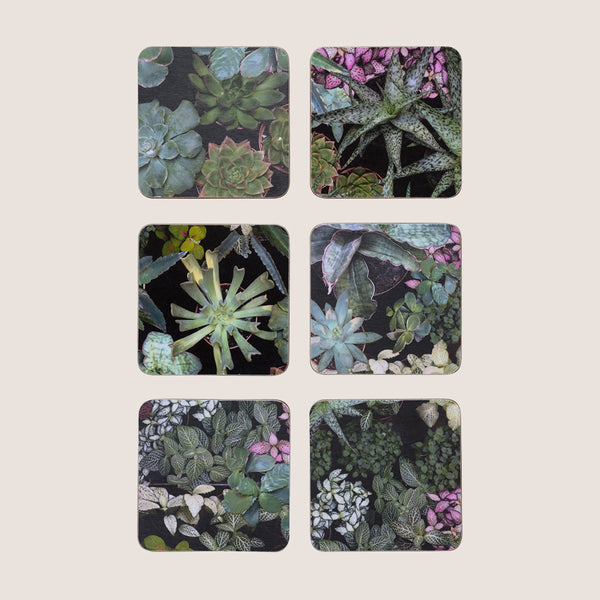 Surreal Succulents coasters set of 6