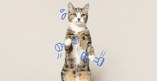 5 creative ways to exercise your cat
