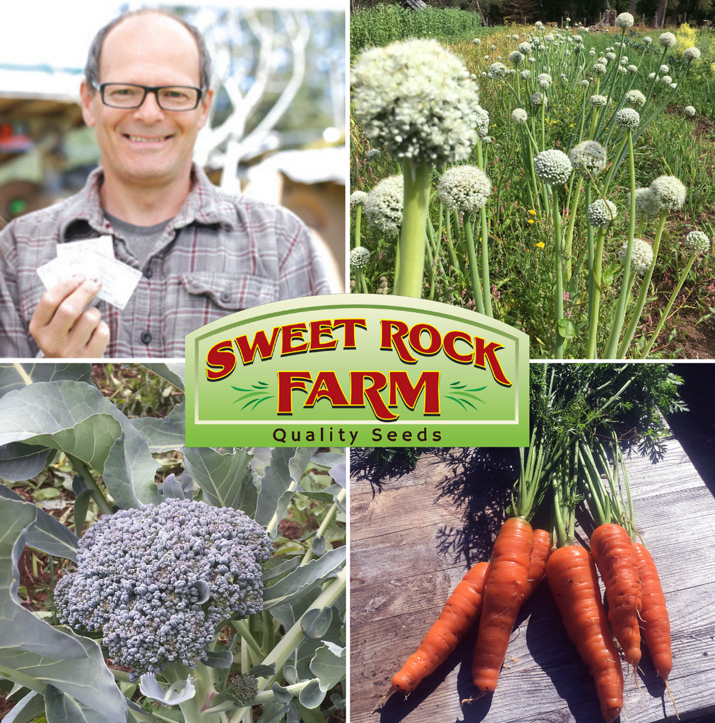 Meet BC Eco Seed Co-op Member Sal Dominelli of Sweet Rock Farm